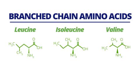 chemical breakdown of 3 branch chain amino acids